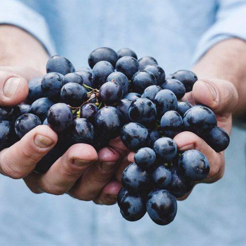 druivenras